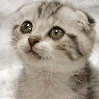 too_cute.jpg